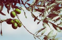Árboles y plantas en la tradición cristiana